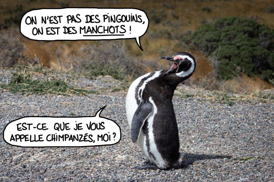 Manchot qui s'énerve car il n'est pas pingouin