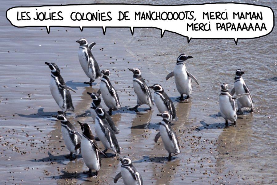 Manchots sur la plage à Punta Tombo, Argentine