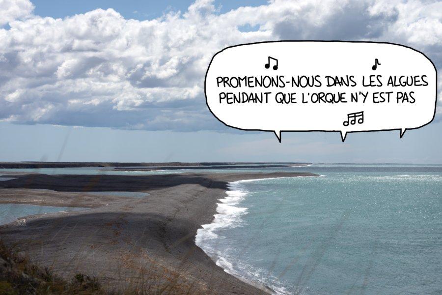 Punta Norte à Valdès, Patagonie