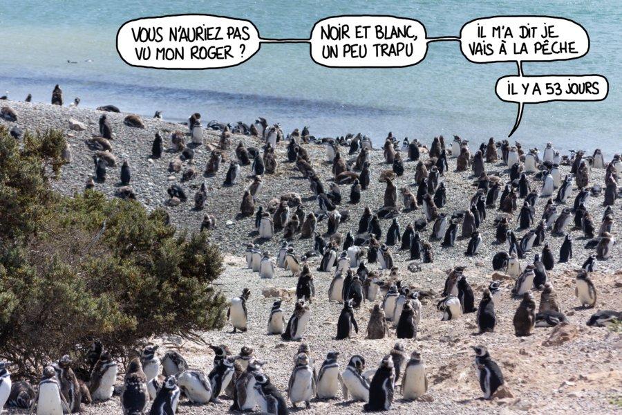 Humour colonie de manchots en Patagonie, Argentine
