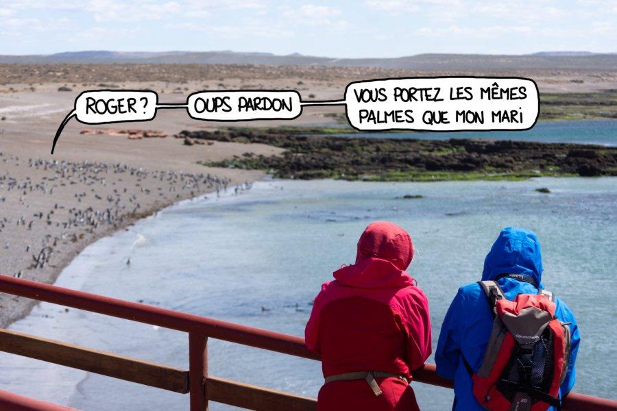 Colonie de manchots de Magellan en Patagonie