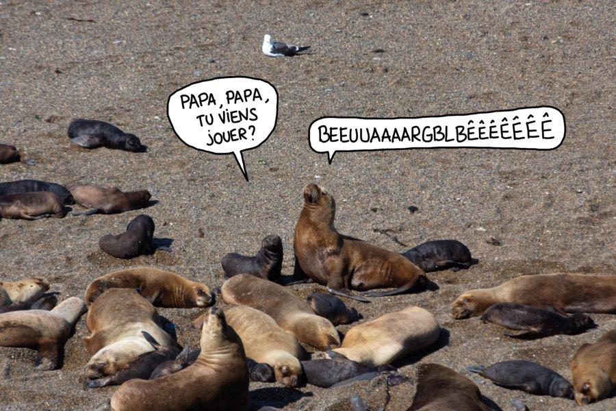 Lions de mer à Valdès en Patagonie argentine