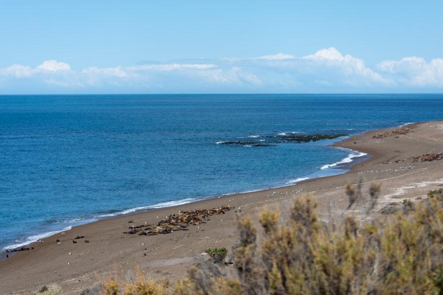 Punta Norte à Valdès, Argentine