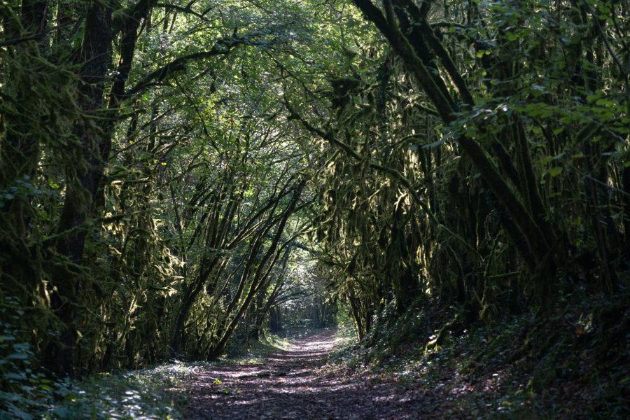 Randonnée dans la forêt près d'Albas : le circuit des payrols