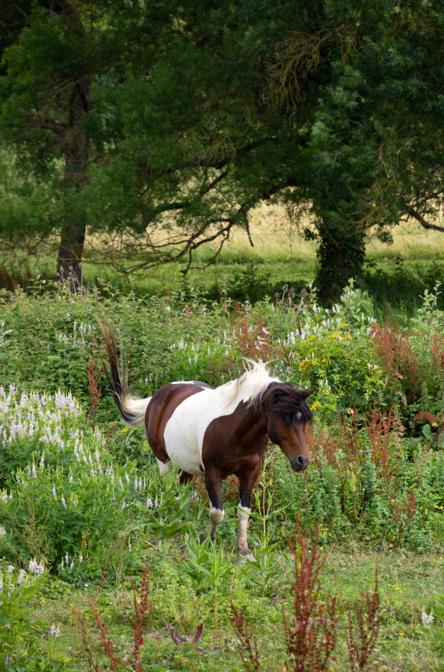 Cheval dans le Gers, promenade près de Lectoure