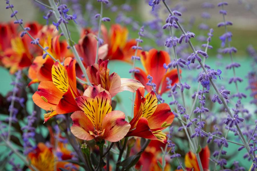 Fleurs de printemps dans le Gers