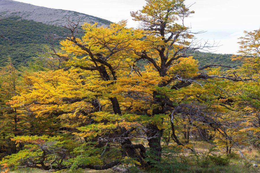 Couleurs d'automne dans le parc Los Glaciares en Argentine