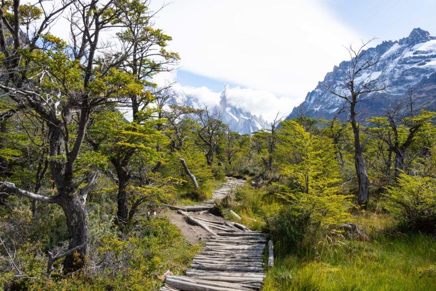Randonnée d'El Chaltén à la Laguna Torre