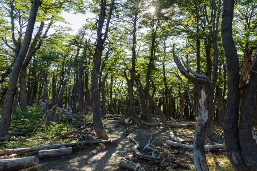Randonnée en forêt, Loma Pliegue Tumbado