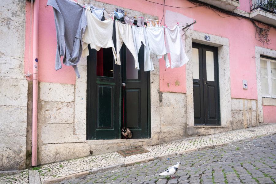 Chat et pigeon dans une rue de Lisbonne