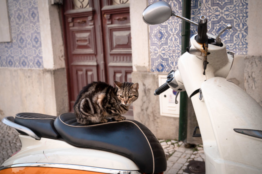 Chat sur un scooter à Mouraria, Lisbonne
