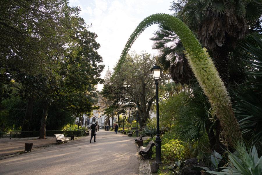 Jardin d'Estrela à Lisbonne en hiver