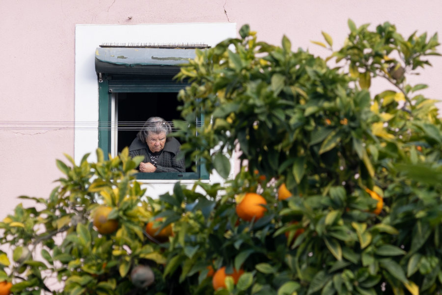 Orangers et fenêtre à Lisbonne