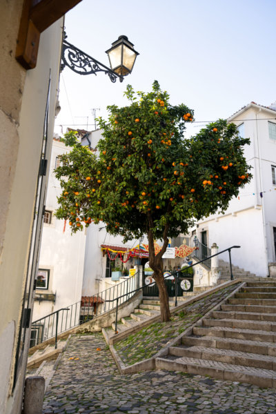 Orangers dans le quartier d'Alfama à Lisbonne
