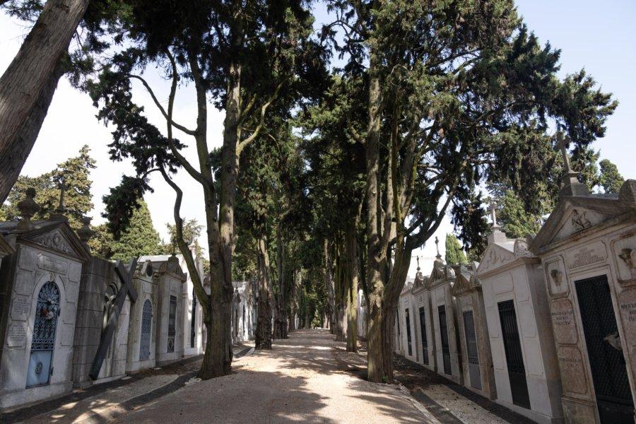 Visite du cimetière dos Prazeres à Campo de Ourique