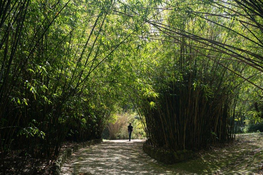 Visite du jardin botanique de Lisbonne