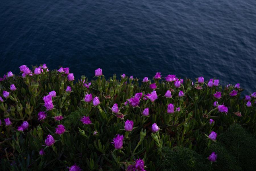 Fleurs dans la nuit au Cap Espichel, Arrabida