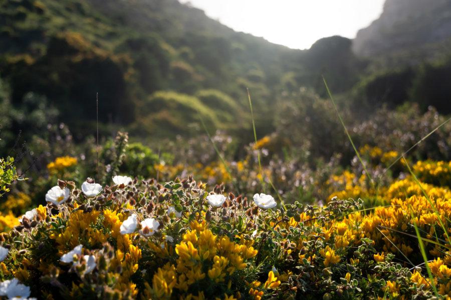 Fleurs et roche au Cabo Espichel, Parc naturel d'Arrabida