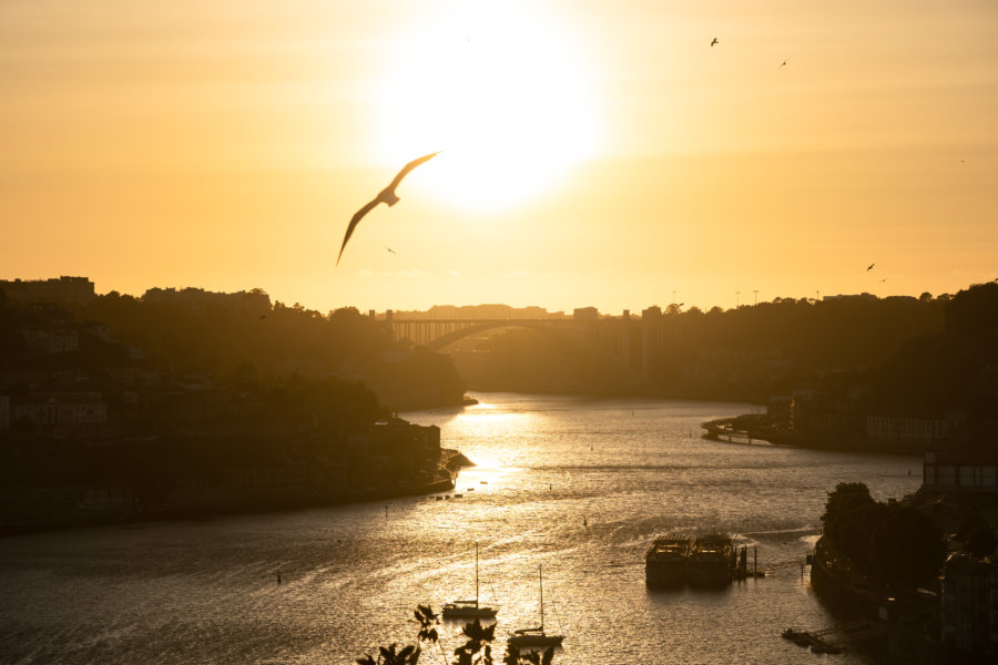 Coucher de soleil à Porto avec goélands