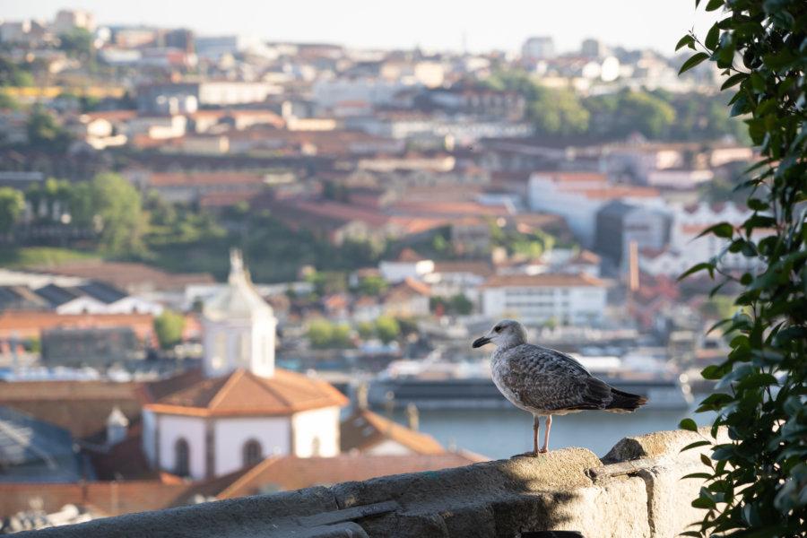 Mirador Vittoria à Porto, avec goéland