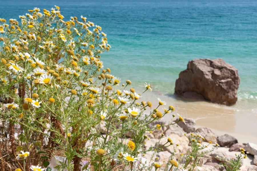 Vacances dans le parc d'Arrabida : plage de Figueirinha