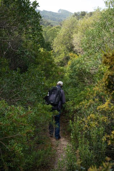 Randonnée dans la Serra do Risco, Arrabida, au milieu des arbustes