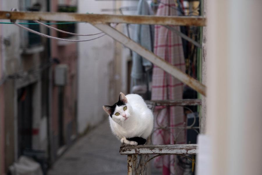 Chat sur un balcon à Setubal