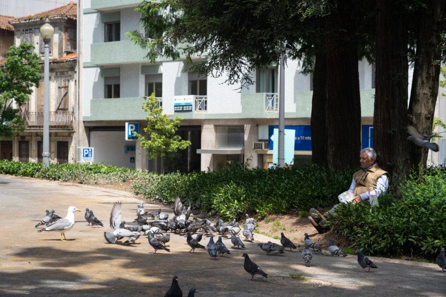 Portugais qui nourrit des pigeons à Porto